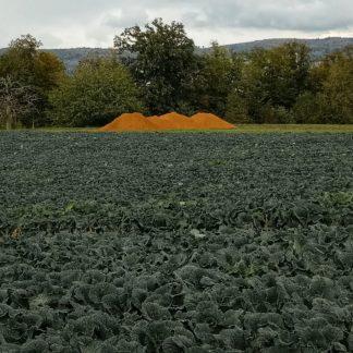 Hinter einem Kohlfeld mit dunkelgrünen Kohlpflanzen liegt ein rötlich schimmernder Haufen Erde.In der Art Ayers Rock.