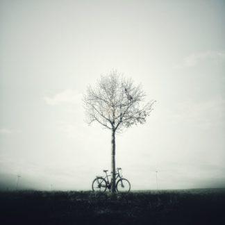 Fahrrad lehnt an einem kleinen Baum vor milchig weißem Hintergrund. Gegenlichaufnahme. Silhouettenhaft, kaum Zeichnung in den Flächen..