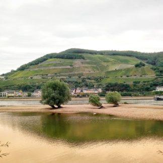Fluss bei Niedrigwasser mit Insel, auf der rundköpfige Bäume stehen. Im Hintergrund auf der gegenüberliegenden Flssseite Hänge mit Weinreben und ein enges Dorf.