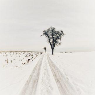 Zugeschneide weite Landschaft. Ein Weg, offenbar von einem Auto gespurt, führt an einem kahlen Birnbaum vorbei und verliert sich am Horizont in Bildmitte im grau des Himmels.
